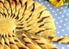 Ήλιος σφολιάτας με Νουτέλα με 3 υλικά σε 15 λεπτά, από το sintayes.gr!