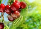 6 καλοκαιρινά σούπερ φρούτα για δίαιτα, από  τον Θοδωρή Διάκο και το iatronet!
