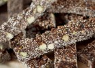 Παστέλι με σοκολάτα – Chocolate Sesame Seed Bars, by Akis and akispetretzikis.com!