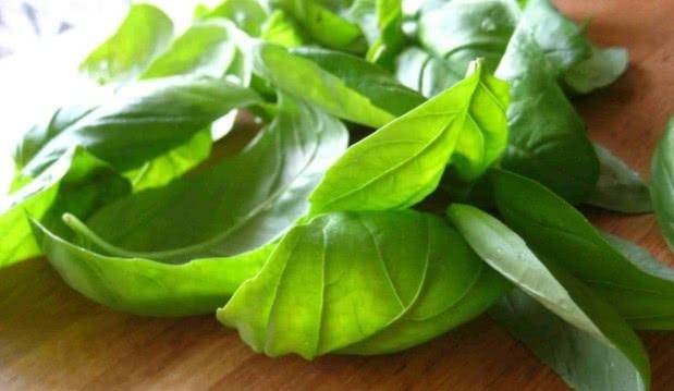 «Διαβήτης: Τα ελληνικά βότανα που τον καταπολεμούν πιο αποτελεσματικά», από τον Μιχάλη Θερμόπουλο και το iatropedia.gr!