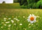 «Ποιο βότανο προστατεύει το θυρεοειδή σου;», από το Hashimoto.gr!