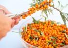Ιπποφαές:  η τροφή που μας γεμίζει υγεία και ενέργεια, από το Votanonkipos.gr!