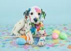 «Δροσίστε τον τετράποδο σας  φίλο με σπιτικές γρανίτες!», από το doggrin.gr!